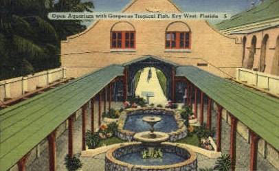 Open Aquarium - Key West, Florida FL Postcard