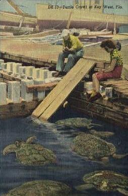 Turtle Crawls - Key West, Florida FL Postcard