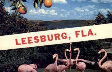 Leesburg - Florida FL Postcard