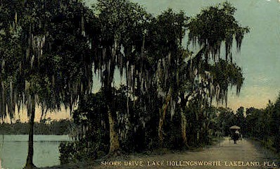 Shore Drive - Lakeland, Florida FL Postcard