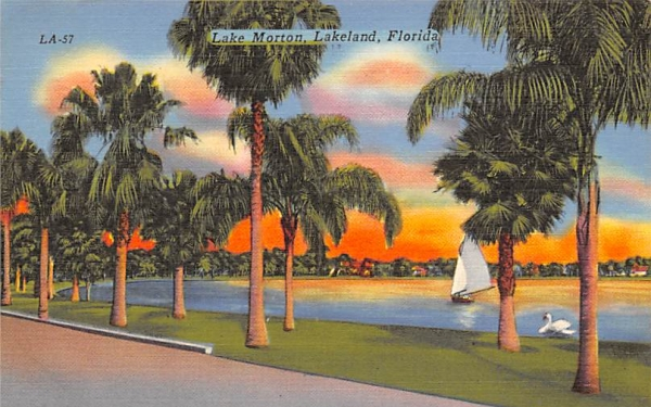 Lake Morton Lakeland, Florida Postcard