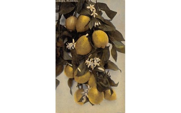 Lemons Florida Postcard