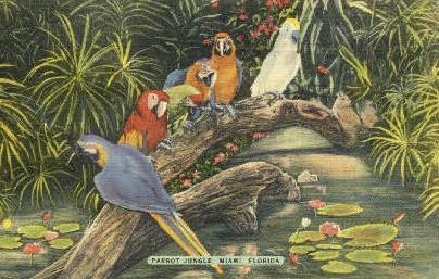 Parrot Jungle - Miami, Florida FL Postcard