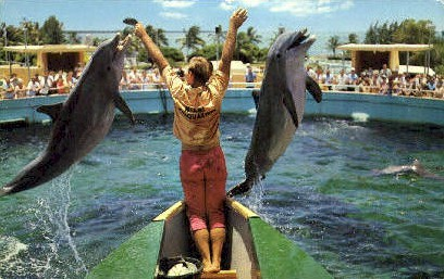 Sea Wonder of the World - Miami, Florida FL Postcard