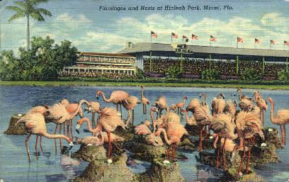Flamingos - Miami, Florida FL Postcard