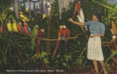 Red Road - Miami, Florida FL Postcard