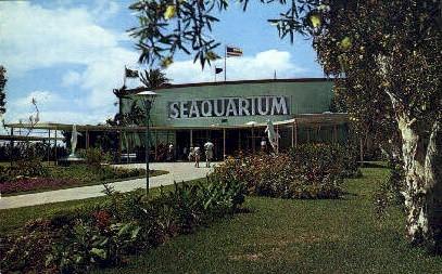 Seaquarium - Miami, Florida FL Postcard