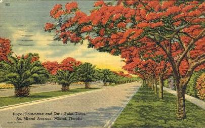 Royal Poinciana - Miami, Florida FL Postcard