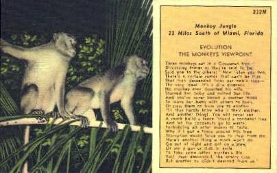 Monkey Jungle - Miami, Florida FL Postcard