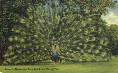 Rare Bird Farm - Miami, Florida FL Postcard