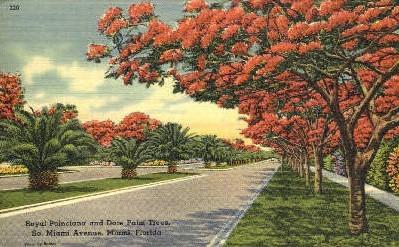 Royal Poinciana - Miami Beach, Florida FL Postcard
