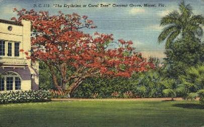 Coconut Grove - Miami Beach, Florida FL Postcard
