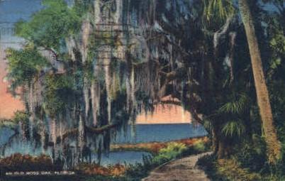Moss Oak - Misc, Florida FL Postcard