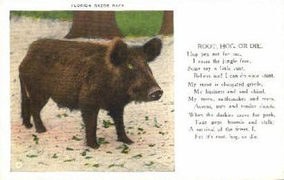 Razorback Hog - Misc, Florida FL Postcard