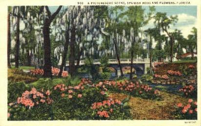 Spanish Moss - Misc, Florida FL Postcard