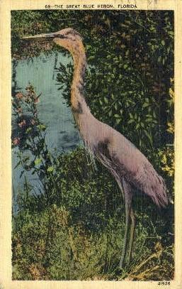 Blue Heron - Misc, Florida FL Postcard