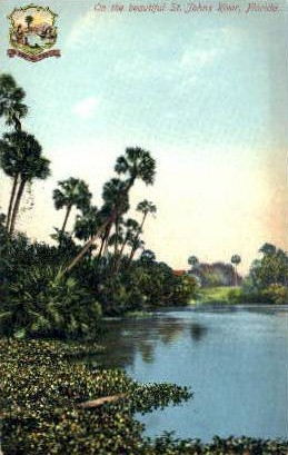 St. John's River - Misc, Florida FL Postcard