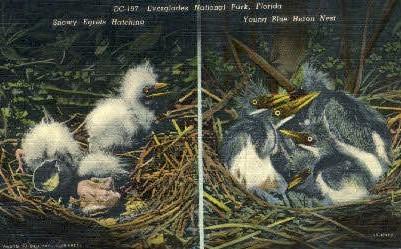 Everglades National Park - Florida FL Postcard