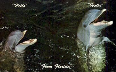 Dolphins - Misc, Florida FL Postcard