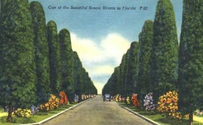 Scenic Streets - Misc, Florida FL Postcard