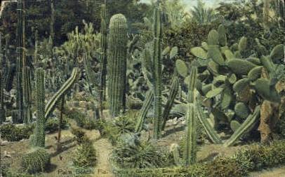 Cactus - Palm Beach, Florida FL Postcard