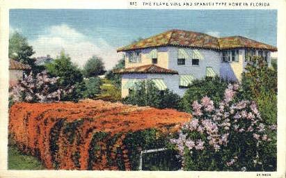 Flame Vine - Misc, Florida FL Postcard