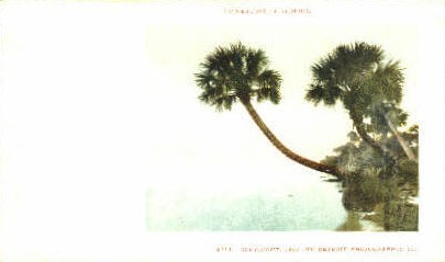Palmettoes - Misc, Florida FL Postcard