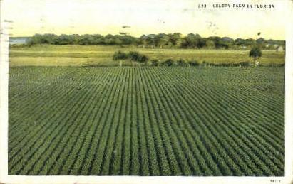Celery Farm - Misc, Florida FL Postcard