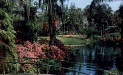 Azalea Time - Misc, Florida FL Postcard