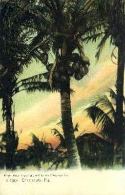 Cocoanuts - Misc, Florida FL Postcard