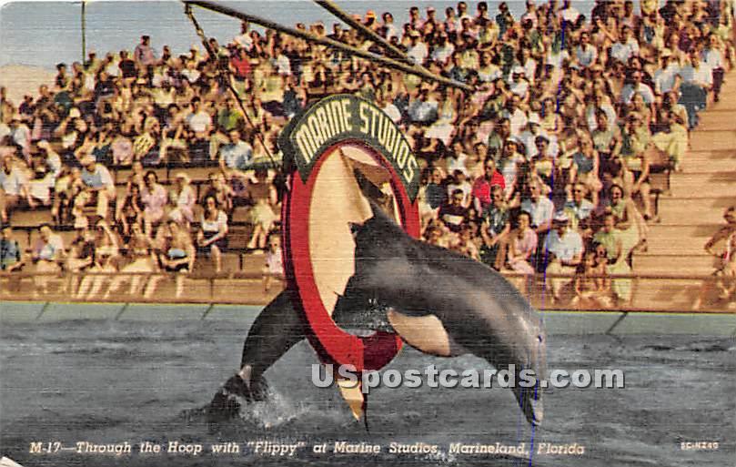 Marine Studios - Marineland, Florida FL Postcard