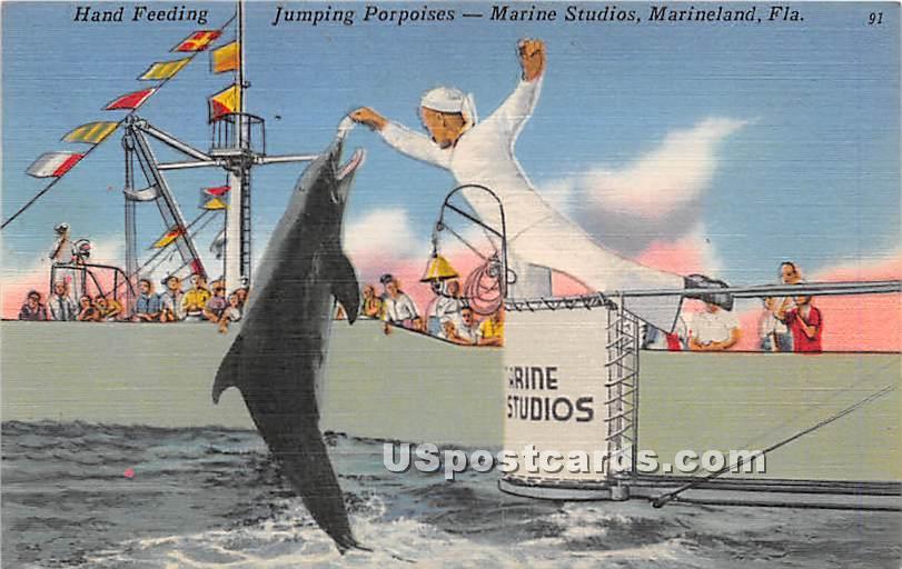 Hand Feeding, Marine Studios - Marineland, Florida FL Postcard