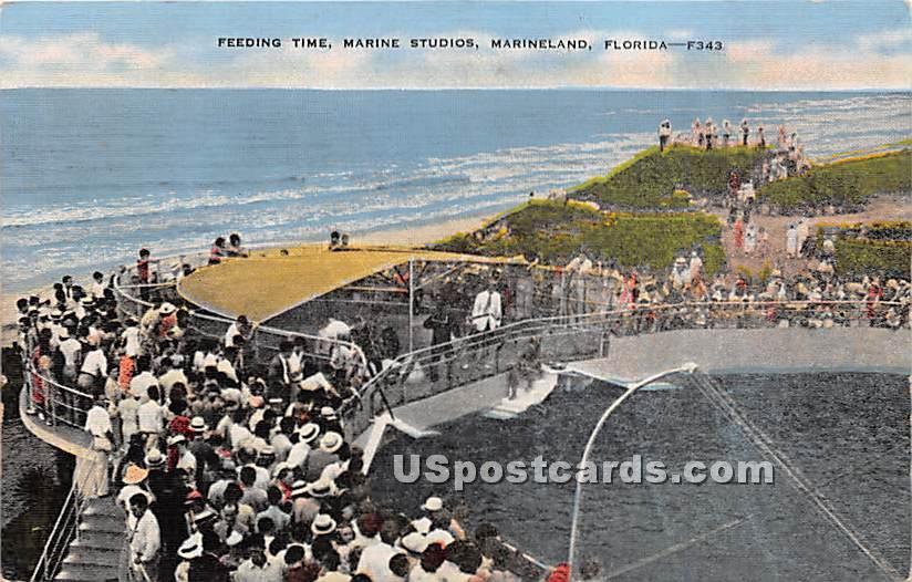 Feeding Time, Marine Studios - Marineland, Florida FL Postcard