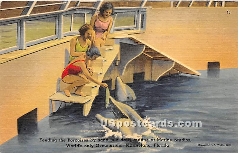Porpoises, Oceanarium - Marineland, Florida FL Postcard