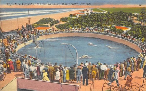 Top Deck Crowd at Marine Studios Marineland, Florida Postcard