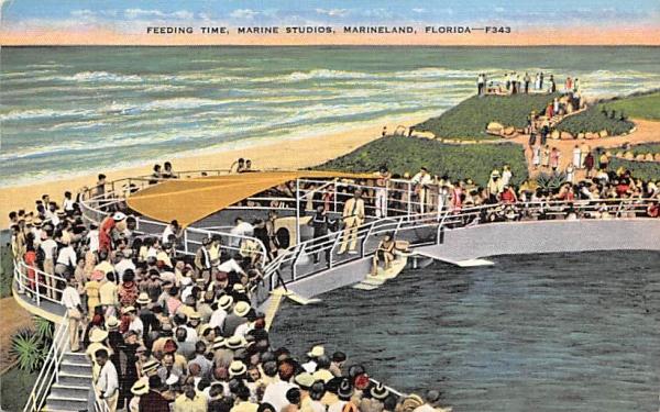 Feeding Time, Marine Studios Marineland, Florida Postcard