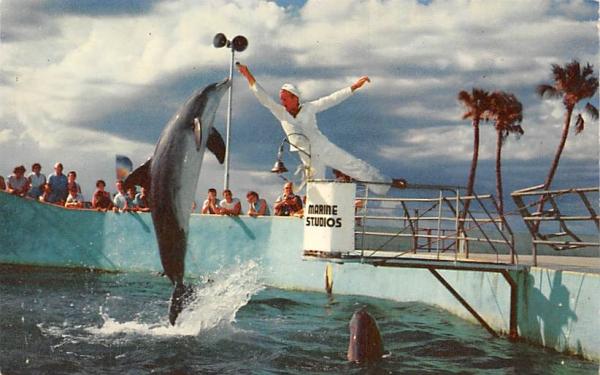 The World Famous Jumping Porpoises  Marineland, Florida Postcard