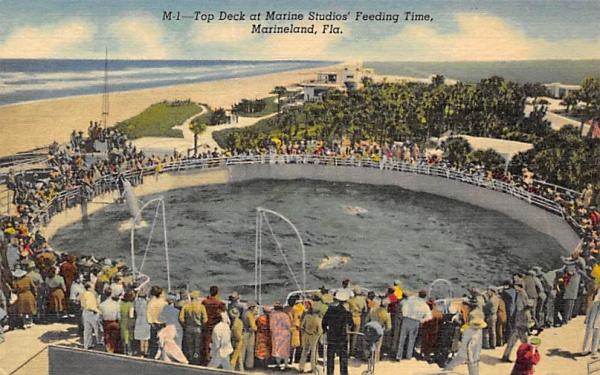 Top Deck at Marine Studios' Feeding Time Marineland, Florida Postcard