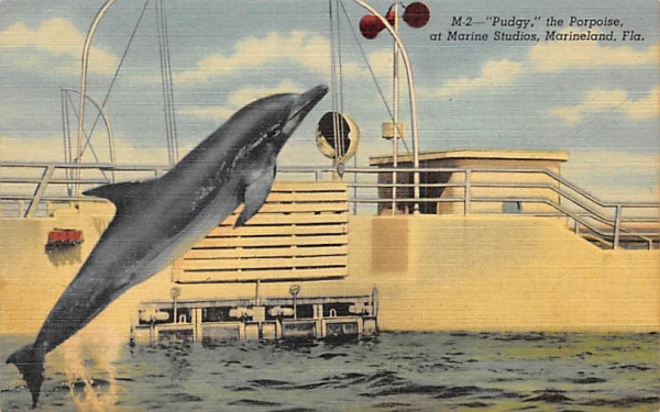 Pudgy, the Porpoise at Marine Studios Marineland, Florida Postcard
