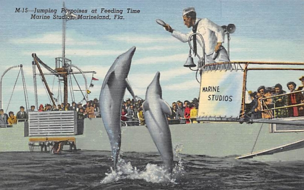 Jumping Porpoises at Feeding Time Marine Studios Marineland, Florida Postcard