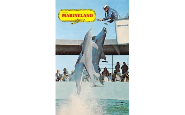 Florida's Marineland, USA Postcard