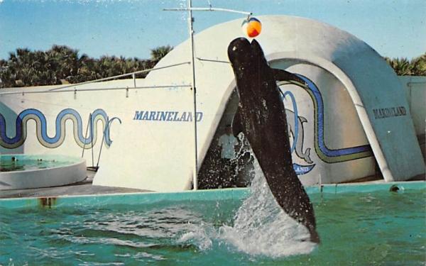 Marineland, FL, USA Florida Postcard