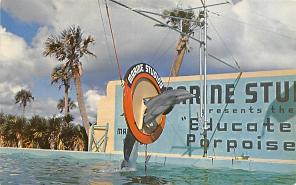 Porpoises, Marine Studios Marineland, Florida Postcard