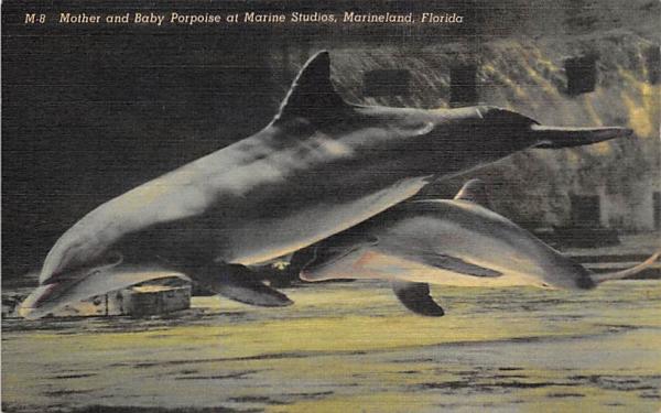 Mother and Baby Porpoise at Marine Studios Marineland, Florida Postcard