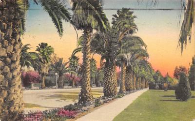 A Palm-shaded Avenue Misc, Florida Postcard