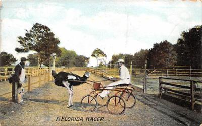 A Florida Racer Postcard
