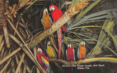 The Parrot Jungle, Red Road Miami, Florida Postcard