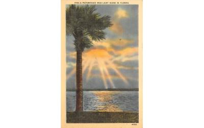 A Picturesque Moonlight  Scene in Florida, USA Postcard