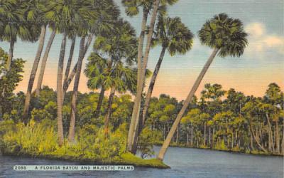 A Florida Bayou and Majestic Palms Postcard