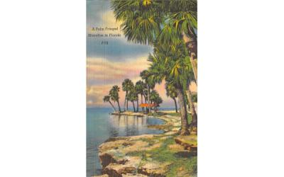 A Palm Fringed Shoreline in Florida, USA Postcard